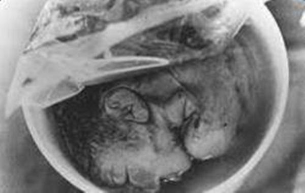 bí mật kinh hoàng mẹ giết hại con 8 tháng tuổi, bí mật kinh hoàng dưới bồn cầu
