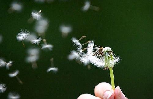 giải mã giấc mơ về gió
