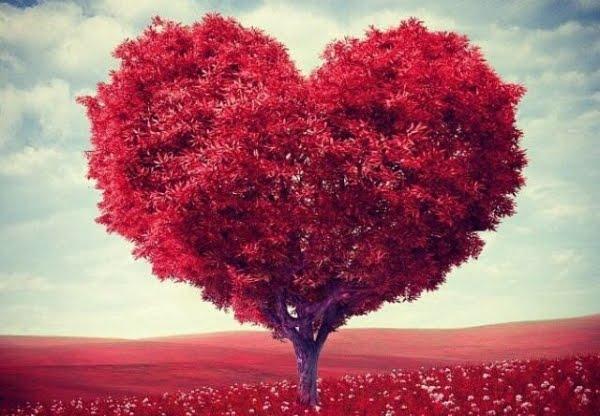 Mơ thấy tim